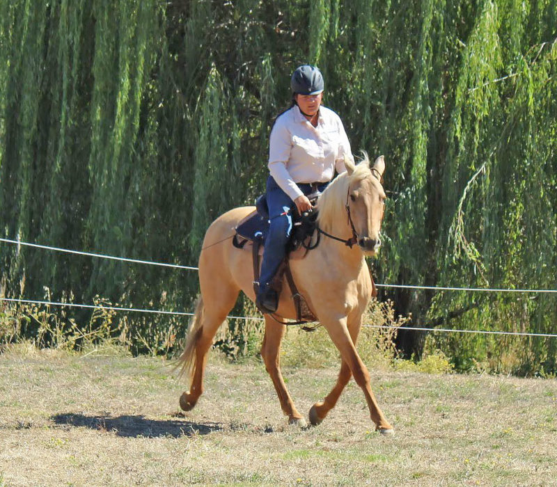 training a palomino horse